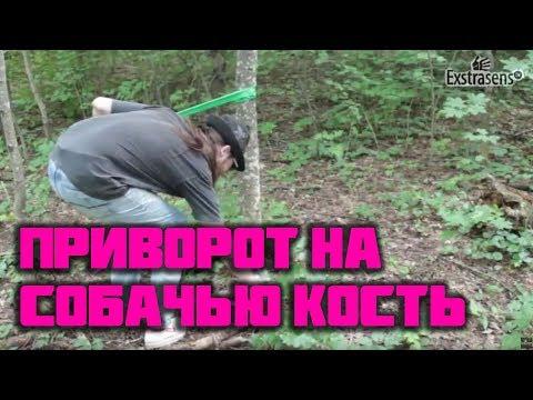 Приворот на дерево и собачью кость