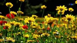 ♡ André Rieu - Nightingale Serenade (Toselli Serenade)