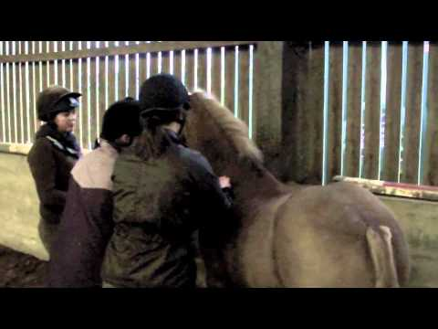 Equine Massage for Horse Owners Demonstration Part 3 of 3