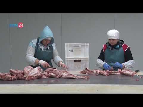 В Ростовской области Управлением Россельхознадзора проведена проверка мясного цеха