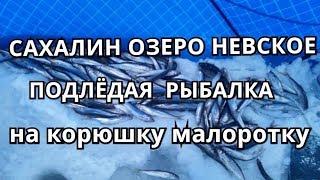 Озеро невское ленинградская область рыбалка