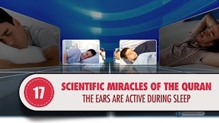 The ears are active during sleep..