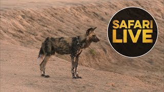 safariLIVE - Sunrise Safari - August 5, 2018