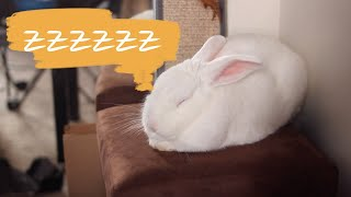 How to know when a rabbit is sleeping