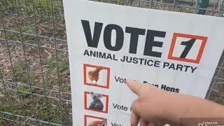 За курятину отдала свой голос. Выборы в Австралии и нашествие какаду. Это надо видеть!