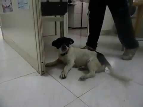 Metodi nazionali per cuccioli da vermi