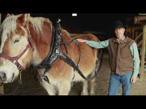 , title : 'Harness Demo - Draft Horses