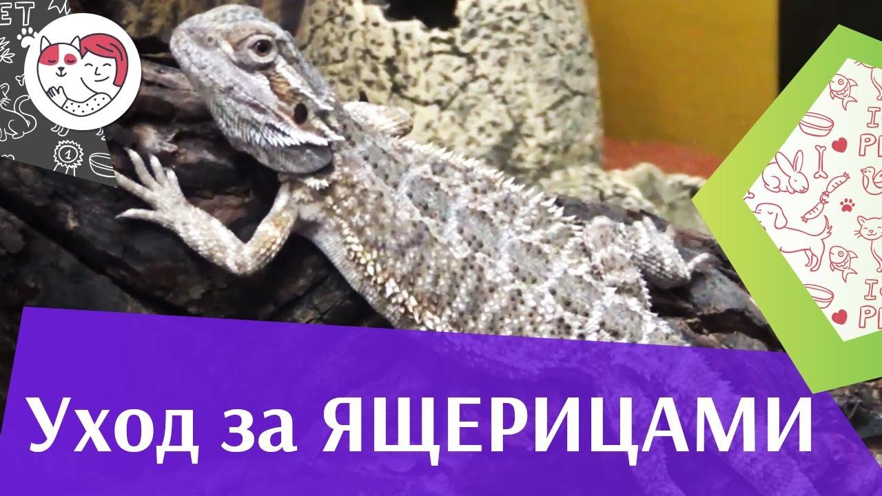 Ошибки при уходе за ящерицами на ilikepet
