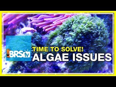 Week 48: Solving your reef tank's algae problems forever | 52 Weeks of Reefing #BRS160