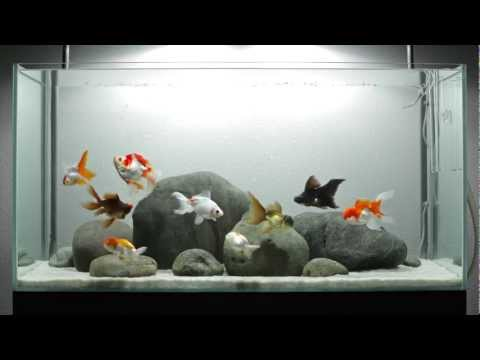 Fish Tank Decorations Canada