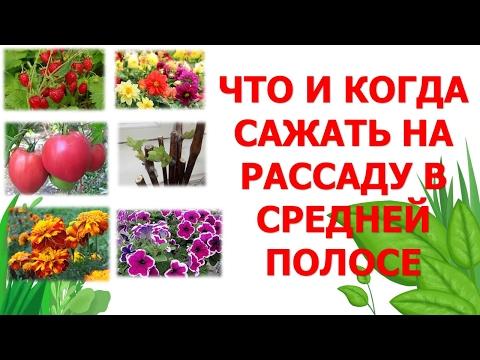 Сроки посева семян на рассаду в средне полосе. Когда сеять семена на рассаду. Выращивание рассады.