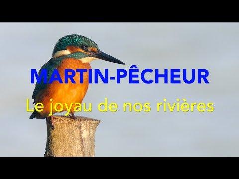 Martin-Pêcheur, Joyau de nos Rivières