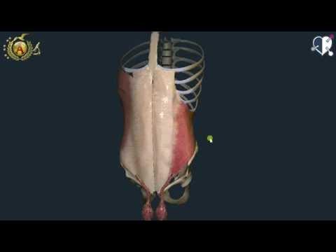 Che rapidamente alleviare il mal di schiena