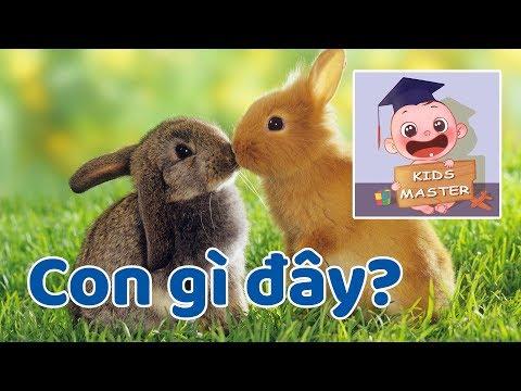 Tìm hiểu về con thỏ