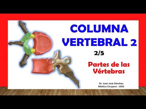 Popular remedios tratamiento de la hernia intervertebral lumbar de la