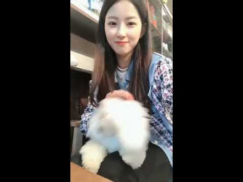 【抖音】寵物合集26 - 會說話的小狗最可愛