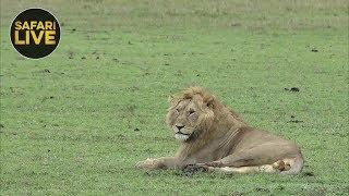 safariLIVE - Sunrise Safari - December 14, 2018