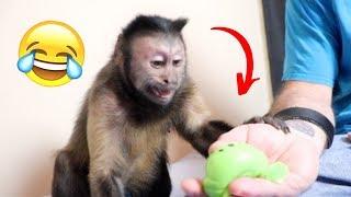 Monkey Reacts To Splat Balls! (FUNNY)