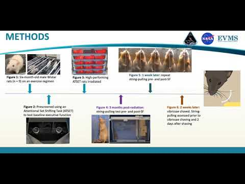 Thumbnail image of video presentation for Role of vibrissae in rat string-pulling behavior following exposure  to multiple space flight stressors