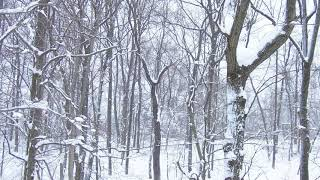 Winter Snow by Chris Tomlin