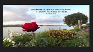 Some people grumble that roses have thorns; I am grateful that thorns have roses. Alphonse Karr