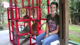 Saving the Habitat of the Sumatran Orangutan | The Orangutan Project