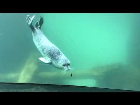 Zabawa foki z motylem