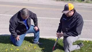 Getting Rid of Quack Grass!