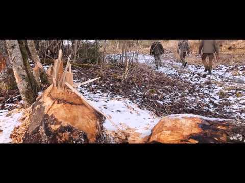 Bebru medības Pokaiņu mežā