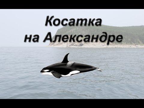 Русская Рыбалка 3.99 Косатка на Александре