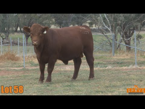 OUTBACK SPRYS HERITAGE Q277
