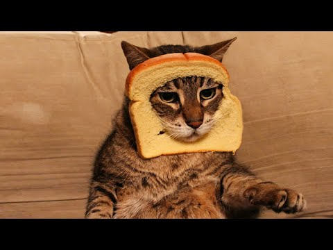 Try Not to Laugh: Hilarious Pet Reactions