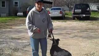 Doggie push ups, video, & instructions