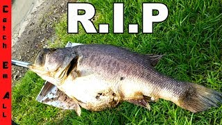 SHAMU R.I.P. **Death of an AMAZING PET**