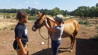 How to halter and lead a horse correctly and safely - Horse Basics for everyone