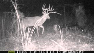 Nice Ten Point Whitetail Visits Feeder in South Georgia