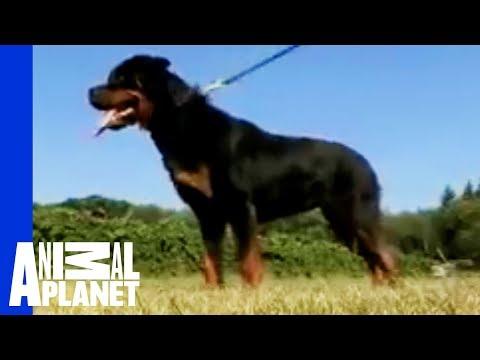Documentario su razze di cani yahoo answers for I cani youtube