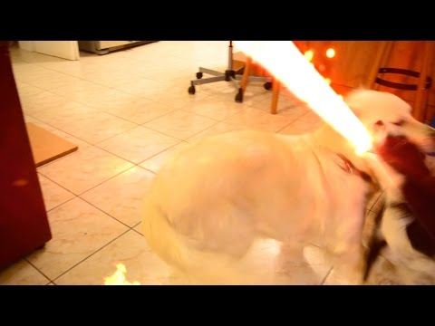 Epic DOG vs DOG fight [Godzilla fight]