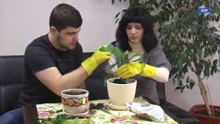 Як пересаджувати квіти?