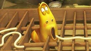 LARVA  Animation drôle |  LARVA ET LA SPAGHETTI |  Dessins animés pour enfants | LARVA  Officiel