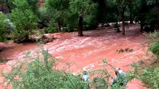Tourists Scramble to Escape Torrential Rainfall in Grand Canyon