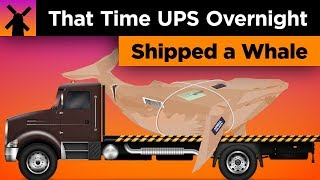 That Time When UPS Overnight Shipped a Whale in the Mail thumbnail