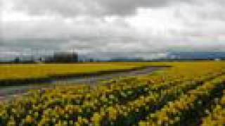 Daffodil Lament - The Cranberries