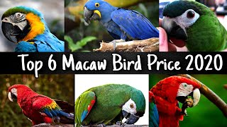 Top 6 Macaw Bird Price 2020