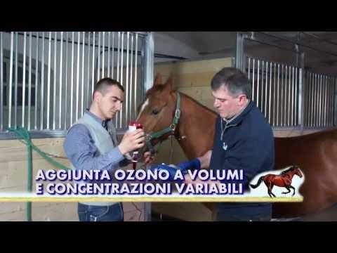 Comprare lattivatore di cavallo per donne in Ucraina