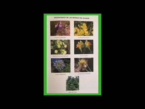Libro : El Juanar y sus plantas medicinales