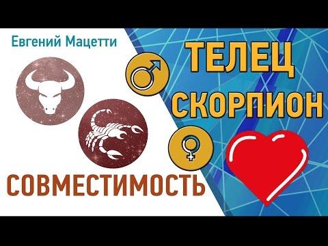 Телец и Скорпион. Гороскоп совместимости ♥ Любовный и сексуальный гороскоп