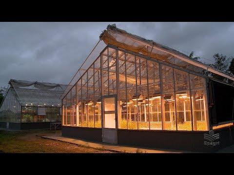 Casa de vegetação de Itajaí