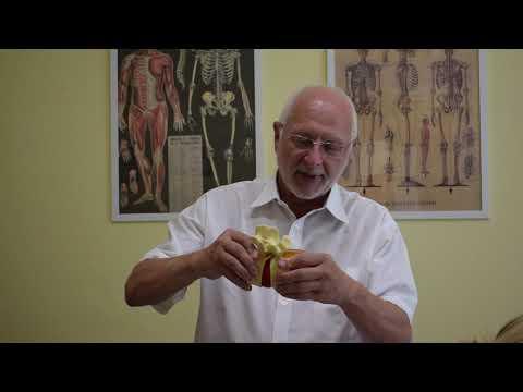 Készítmények a kondroprotektorok csoportjából az osteochondrosis kezelésére