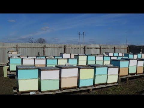 Объединение зимовалой пчелы весной на пасеке
